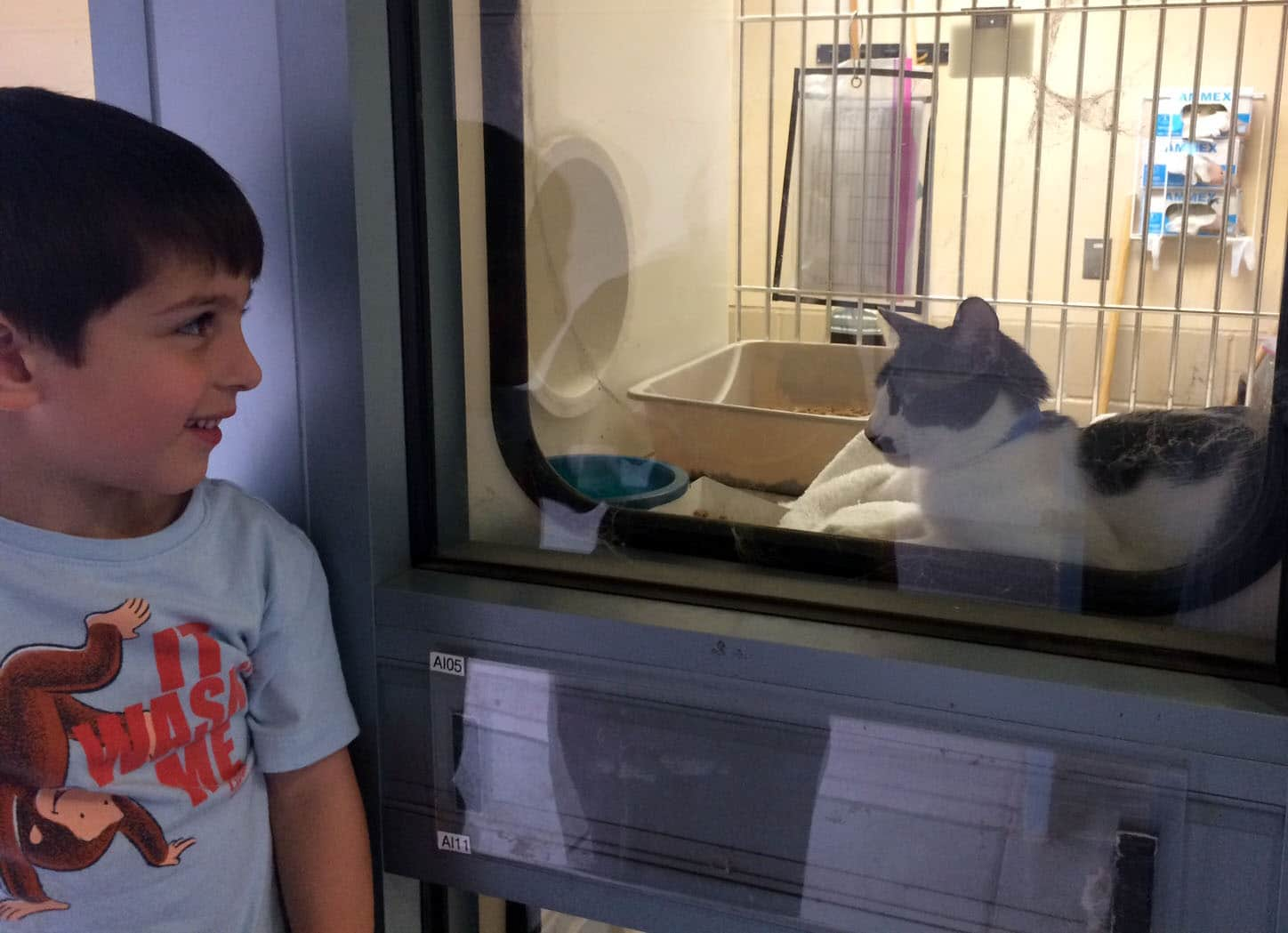 A boy looking at the cat in the Animals Care center